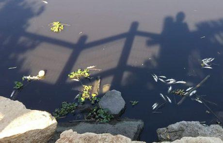 YNET – זיהום משטחי הרשות: דגים מתים וסירחון בנחל אלכסנדר