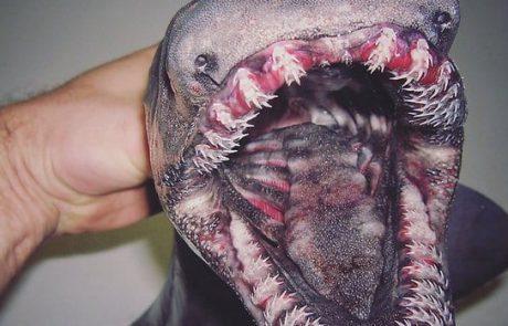 הדייג שמפרסם תמונות של דגים מוזרים בטוויטר (YNET)