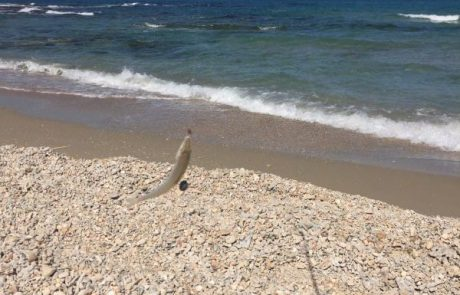"""בנימין: """"ירדתי לחוף הים עם המקל דייג כולל ערכה ואחרי זמן קצר היו אכילות"""""""
