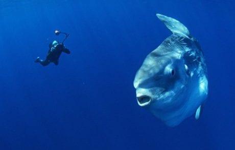 מדהים: דג ענק ונדיר נצפה בחופי אשקלון (MAKO)