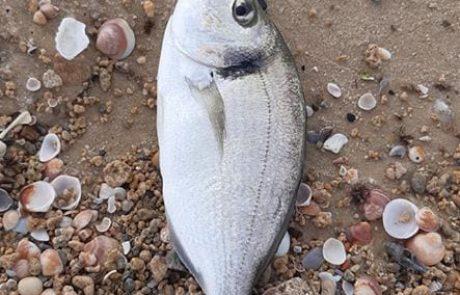 """אלכסיי מגיד: """"""""אולטרה לייט עם מצוף""""בריכה מחוות דגים נגמרה כך !!!"""""""