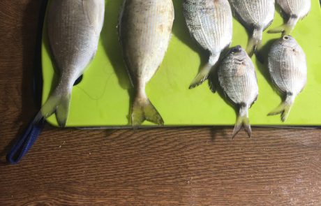 """בנימין הצדיק: """"היום שום דבר אבל אתמול כן אלו הדגים שתראו בתמונה צדתי אמש סוף שבוע נעים לכל דייגי ישראל"""""""