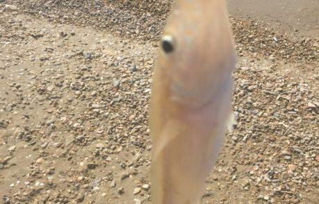 """בנימין: """"חוף אולגה חדרה שעה 11 בבוקר יצאתי לדוג דגים בתוך שעה יצאו 39 דגים ששוחררו חזרה לים"""""""