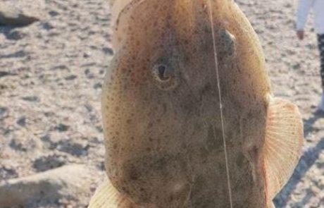 """אבי דהן: """"מי יודע איזה דג זה"""" (C & R)"""