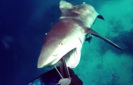 צלילה חופשית – אחד הסרטונים המפחידים!