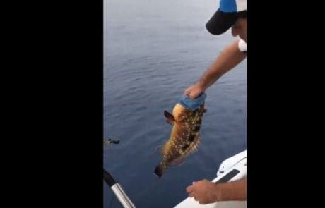 מיקי בוזגלו דייג ספורטיבי אמיתי המכבד את עונת הרבייה ומשחרר לוקוס אדום מכובד בחזרה למים
