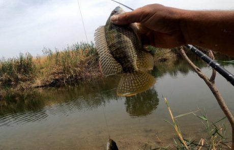 """נפתלי דייג במים מתוקים: """"דייג בוס לנשמה בנהר הירדן"""""""