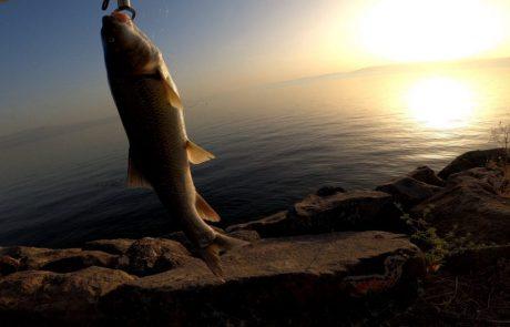 """נפתלי דייג במים מתוקים: """"יציאה לסשן זריחה בכנרת מה אומר לכם חברים אין כמה הכנרת בזריחה"""""""