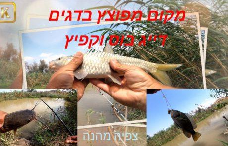 """נפתלי דייג במים מתוקים: """"יש סרטון חדש בערוץ מימקום מלא בדגים שהפתיע אותי ממש"""""""