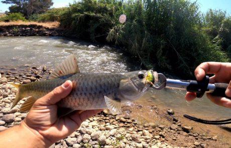 """נפתלי דייג במים מתוקים: """"יום עם מלא דגים בירדן הררי מלחמות עם דגים חזקים בזרם"""""""