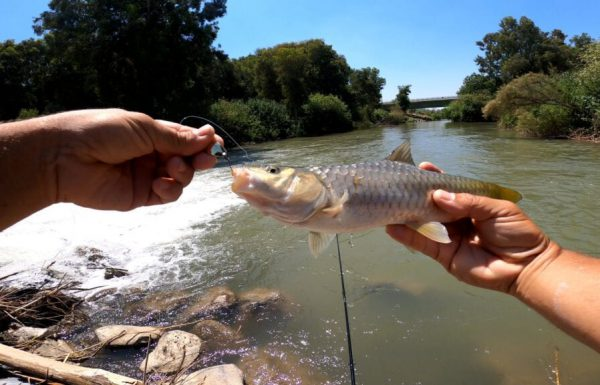 """נפתלי דייג במים מתוקים: """"המסע נמשך לאורך נהר הירדן…"""""""