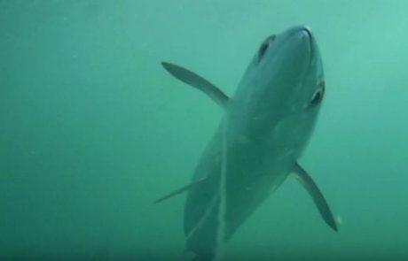 רוצים לראות מה עובר על דמוי מתחת למים?