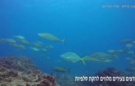פיסת גן עדן ישראלי – פברואר 2016 בצלילה חופשית בשמורה