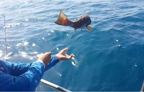 מומלץ: שחרור ממבט מעוף הדג
