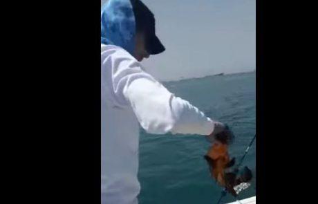 אלון דייג ספורטיבי משחרר לוקוס מתחת לגיל רבייה