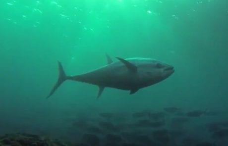 אבידג: המיטב מהים התיכון 2014-2016