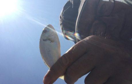 """בנימין: """"בשעה 9 בבוקר חוף הדייגים אולגה חדרה דגתי 10 דגים שבתמונה שחררתי אותם שיגדלו"""""""
