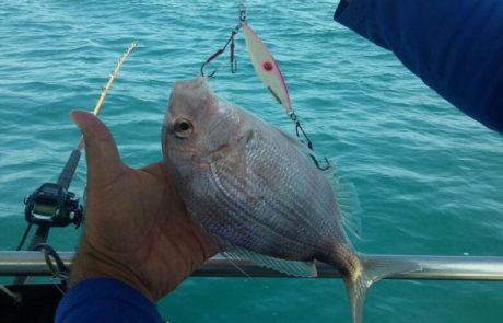 ראובן דייג ספורטיבי אמיתי משחרר מהסירה דג פרידה מתחת לגיל רבייה