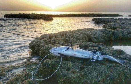 """קיץ על החוף  / תחזית סופ""""ש לדייגים"""