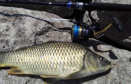 נתן נוריאל: דיג בכנרת (טבריה)