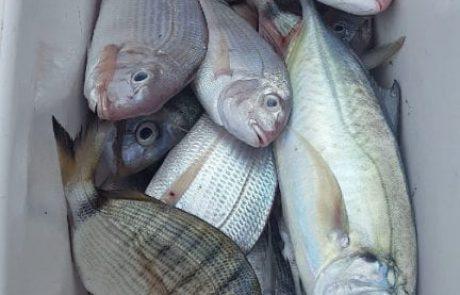 היתם מלחם: דיג מסירה