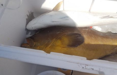 צוות כלו ביציאת דיג מושלמת מהסירה