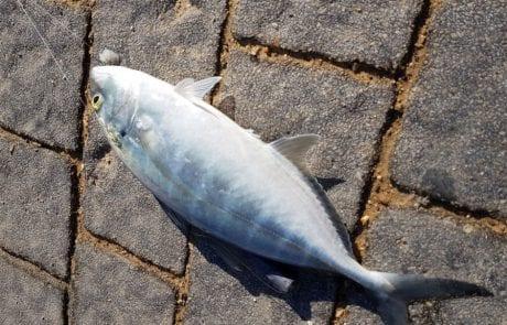 """אורן מועלם: """"דיג מהחומה ביפו"""""""