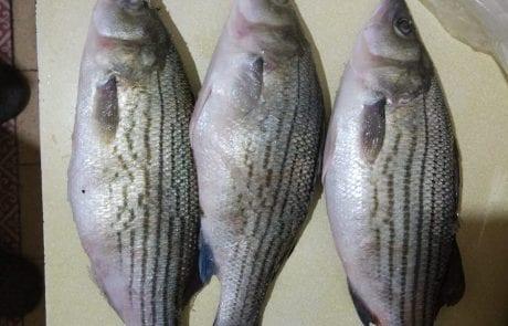 """דימה: """"היי, אבא שלי דג את אלה השאלה שלי האם מישהו מזהה את הדג?"""""""