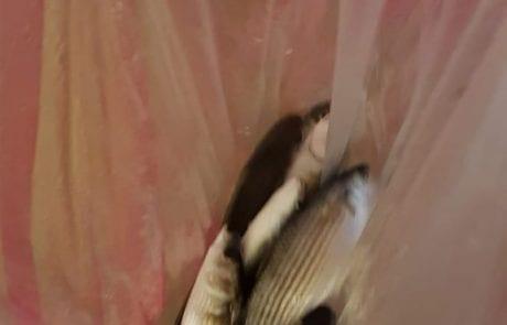 """ליאור: """"דיג ברידינג משעה 6 בבוקר עד 9.30 בבוקר החגיגה התחילה חצי שעה של דיג"""""""
