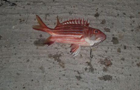"""אלאור אברהם: """"עזרה בזיהוי הדג """""""