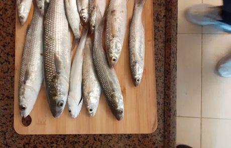 """ליאור לביא: """"דיג ברידניג יום שבת מ 6 עד 9 בבוקר אחלה דיג"""""""