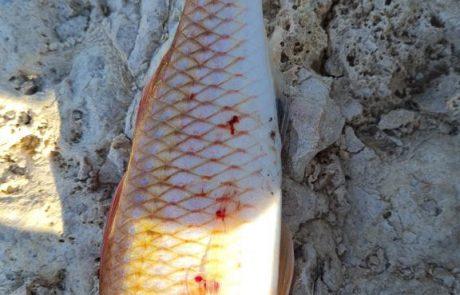 """עדי קוט: """"למישהו יש מושג איזה דג זה (מפרץ אילת)?"""""""
