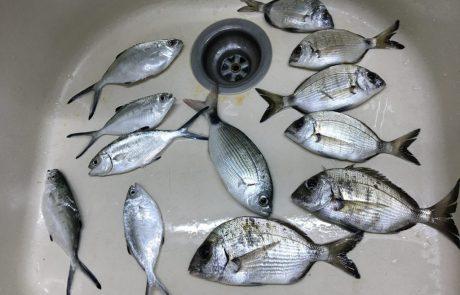 """אביב עזרן: """"שעתיים דייג בבוס על פילוטה תוצרת עצמית, יצאו המון…"""""""