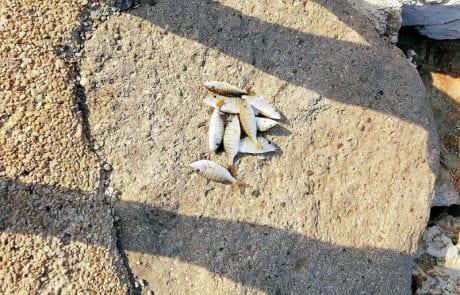 יעקב הדייג: בוקר שבת יצאתי לדוג בתל אביב בדולפינריום