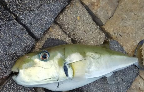 """דוד קיסמן: """"דייג מתחיל. איזה דג זה?"""""""