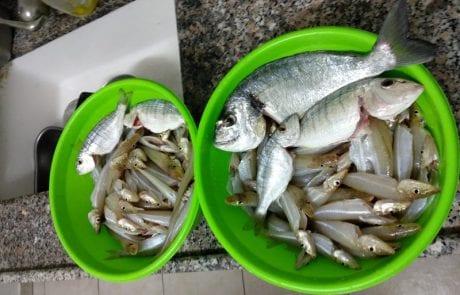 """אוסקר הסקל: """"יום של דיג ללא הפסקה"""""""