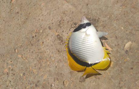 """מרדכי בן שמעון: """"לא מכיר את סוג הדג? אבל הוא כנראה מוגן אז החזרתי אותו למים"""""""
