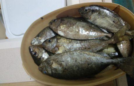 """דויד: """"דגי ארסים, הדג הכי טעים שיש בים, גדולים ויפים."""""""