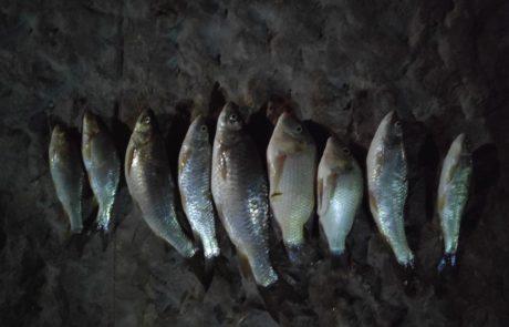 """שלומי: """"איזה דגים אלו ??????? נתפסו בכנרת"""""""