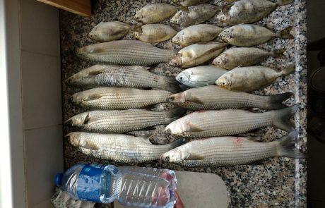 """אוסקר הסקל: """"דגים לחג לכל המשפחה++"""""""