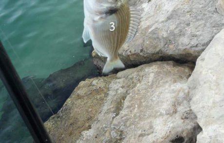 """דביר שבתאי: """"3 דגי דניס נתפסו באיזור מרינה"""""""