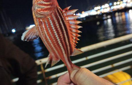 """נתנאל: """"מישהו יודע איזה דג זה?"""""""