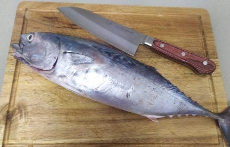 """עידו ארזי: """"פילוט של דג טונה"""""""