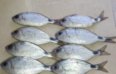 """ניר איטח: """"לאחר הגשם הדגים נעשים רעבים הרבה יותר… """""""