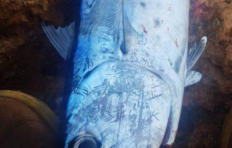 """שמואל לוי: """"הדג נלחם כמו שהוא הוא יודע (טונית) היה אחלה פייט"""""""