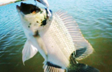 """נפתלי דייג במים מתוקים: """"דייג בנהר הירדן בכמה מקומות שונים הירדן נתן תוצאות יפות"""""""
