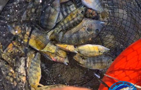 """נפתלי דייג במים מתוקים: """"יום דייג זריחה בכנרת על הקיאק."""""""