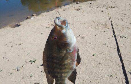 """ישי: """"דייג מושטים על דג חי – תענוג 🎣🎣🎣"""""""