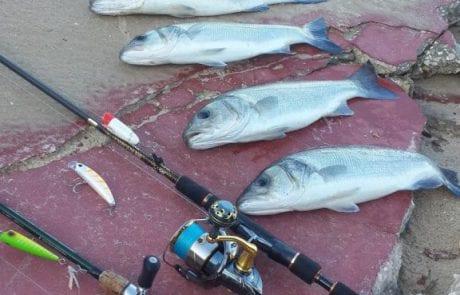בלוג הדייג של טרולוס – פוסט משולב : עונת הלברקים נפתחת בסערה ובחלק השני קניות של מקל חדש ודמויים בעבודת יד
