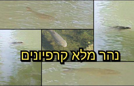 """ליאור בן חיים: """"מצאנו נהר מפוצץ קרפיונים ועוד כמה נקודות מדהימות"""""""